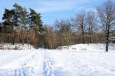 Idyllic winter landscape — Stock Photo