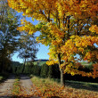 Golden autumn — Stock Photo #41576733