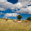 Stock Photo: Few alpine cows on summer meadow