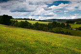 Summer flowering meadows in mountains — Stock Photo