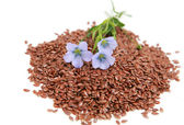 Linum usitatissimum - common flax — Stock Photo