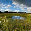 Summer pasture with pond — Stock Photo