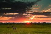 Sheep on field against sun — Stock Photo
