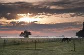 Foggy pasture in Groningen — Stock Photo