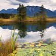 Water lily on Barmsee in Alps — Stock fotografie