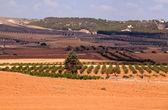 Tipik İspanyol kırsal manzara — Stok fotoğraf