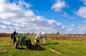 Cavallo e carretto sul campo — Foto Stock