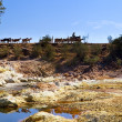 Stock Photo: Hot acidic river Tinto and herd of goats