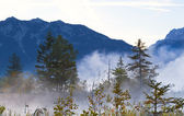 Bosque en alpes bávaros en la niebla — Foto de Stock