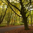Calm silent forest in autumn — Stock Photo #14760371