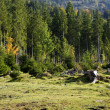 Deforestation in Alps — Stock Photo #14761135