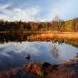Early morning light on forest pond — Stock Photo