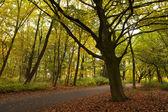 Tranquilo bosque silencioso en otoño — Foto de Stock