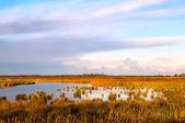 Flooded area in Drenthe by Leekstermeer — Stock Photo