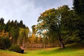 Autumn oak — Stock Photo