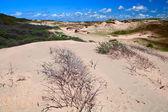 Sand dunes bu Zandvoort aan Zee — Stock Photo