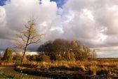 árvore no pântano no outono — Foto Stock