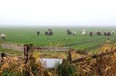 Recinzione in legno su un pascolo con le pecore — Foto Stock