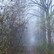 Stock Photo: Path in forest with fog