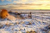 Dutch fields in snow — Stock Photo