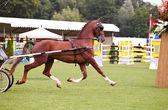 Carreras de caballo en anillo — Foto de Stock