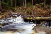 альпийский быстрая река в лесу — Стоковое фото