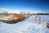 Snow on Dutch pastures — Stock Photo