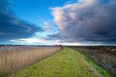 Camino a través de pantanos en la tormenta de la mañana — Foto de Stock