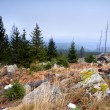 Meadows with stones in Harz — Stock Photo