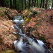 Fast fresh creek in forest — Stock Photo