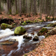 Fast alpine river in the forest — Stock Photo