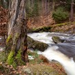 Fast river in Harz mountains — Stock Photo