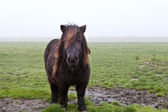 Pony on pasture in fog — 图库照片