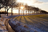 Bright sunbeams through tree — Stock Photo