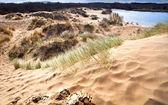 Dunes de sable à haarlem, Pays-Bas — Photo