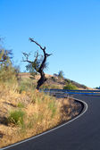 Curved asphalt road in Andalusia — Stock Photo
