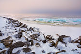 Shelf ice on North sea in winter — Stock Photo
