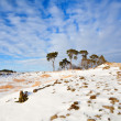 Pine trees on snow hill over blue sky — Stock Photo #23314560