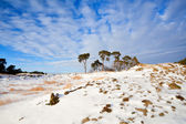 Pine trees on snow hill over blue sky — Stock Photo