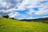 Gelbe blumen auf sommerwiesen — Stockfoto