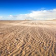 Windy beach by North sea — Stock Photo