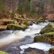 Fast mountain river in forest — Stock Photo