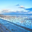 Stock Photo: Low tide on North sea