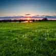 Sunset over meadow with spring wildflowers — Stock Photo
