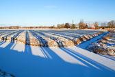 Striped shadows on winter Dutch farmland — Stock Photo