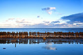 Old wooden breakwater in North sea — Stock Photo