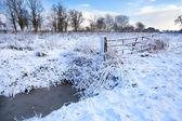 Snow on Dutch farmland — Stock Photo