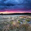 flowering cottongrass on swamp at sunset — Stock Photo