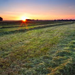 Sunrise over green haymaking — Stock Photo #27894129