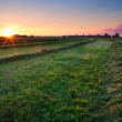 Clipped hay on grassland at sunrise — Stock Photo